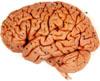 http://www.scrammble.com/brain2.jpg